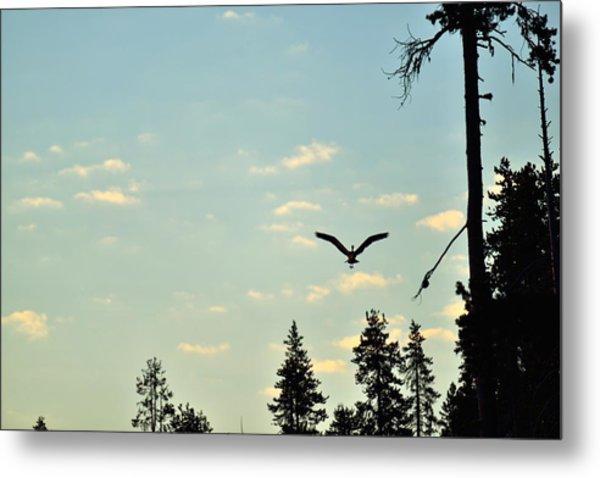 Early Morning Heron In Silhouette Metal Print by Rich Rauenzahn