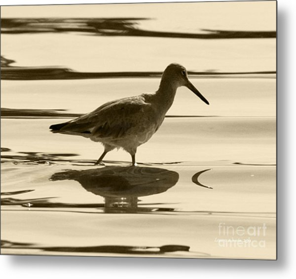 Early Morning In The Moss Landing Harbor Picture Of A Willet Metal Print