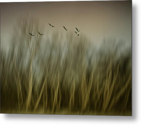 Early Spring Vision... Metal Print