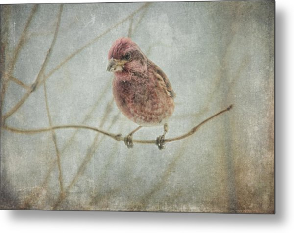 Early Spring Visitor Metal Print