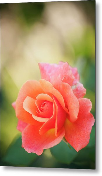 Earth Rose Easy Does It Metal Print