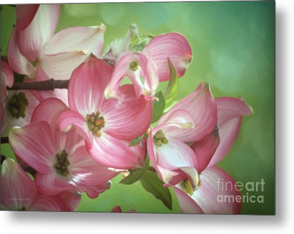 Eastern Dogwood II Metal Print