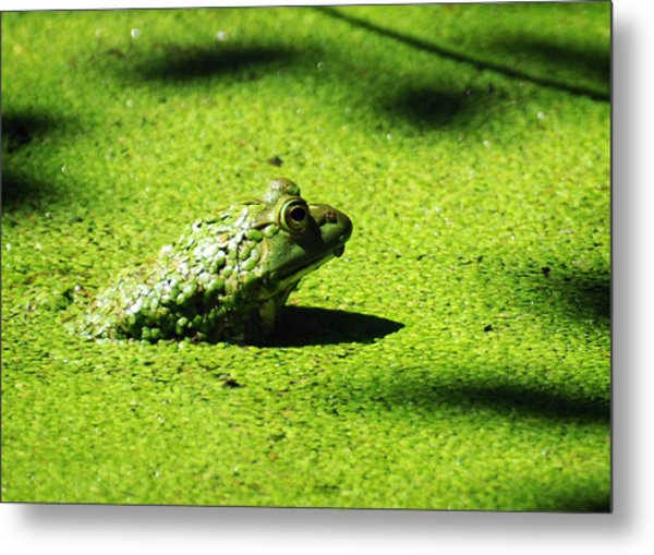 Easy Being Green Metal Print