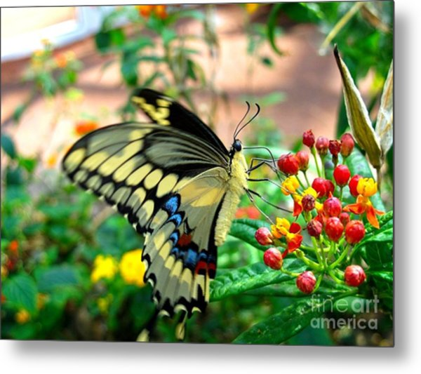 Eating On The Fly Metal Print