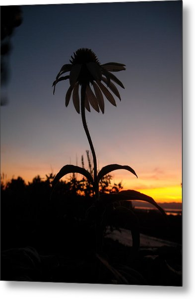 Echinacea Sunset Metal Print