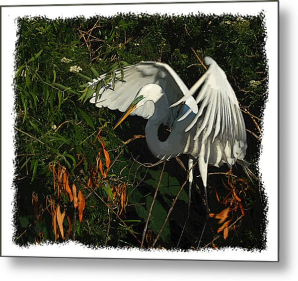 Egret Beauty Metal Print by Wynn Davis-Shanks