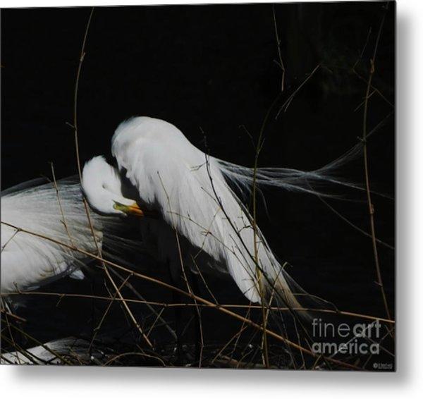 Egret Bird City At Avery Island Louisiana Metal Print