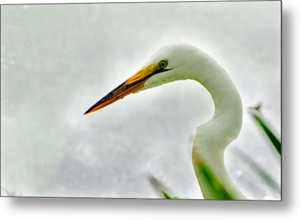Egret Close-up Metal Print