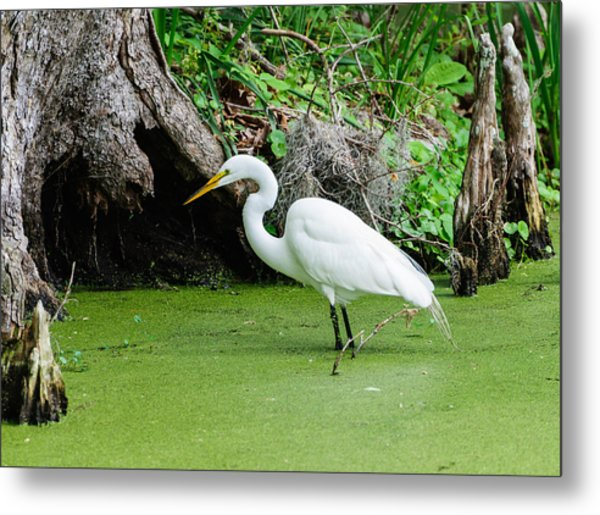 Egret Fishing Metal Print