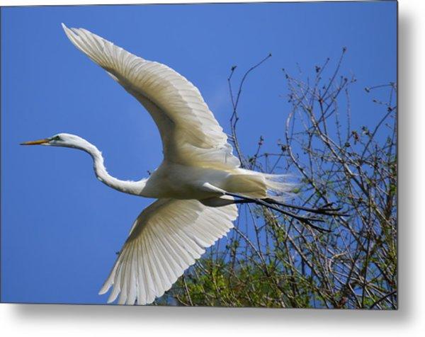 Egret Flying Metal Print