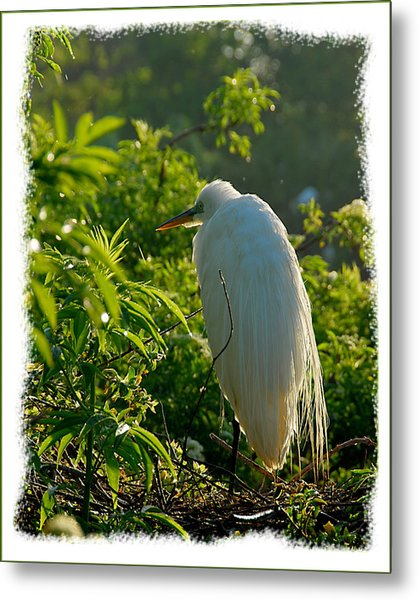 Egret Morning Metal Print by Wynn Davis-Shanks