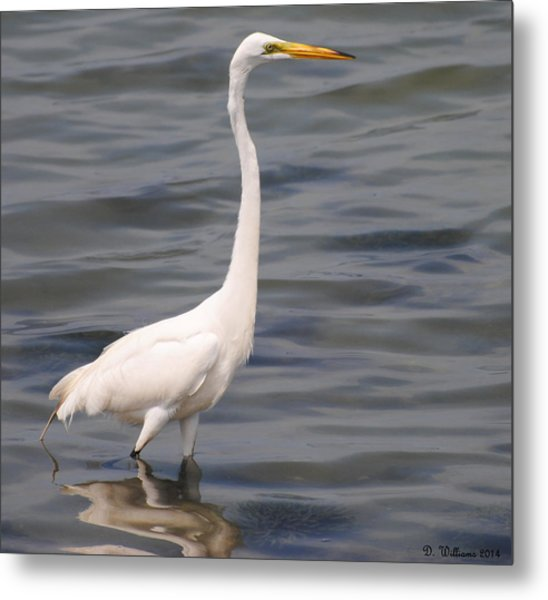 Egret On Alert Metal Print