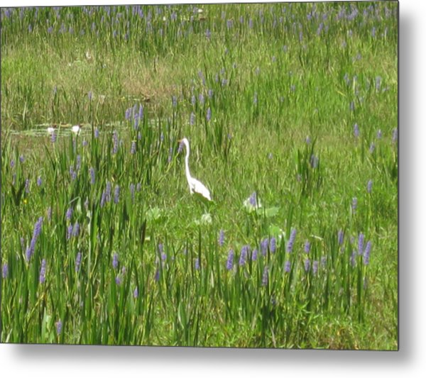 Egret On The Lake Metal Print