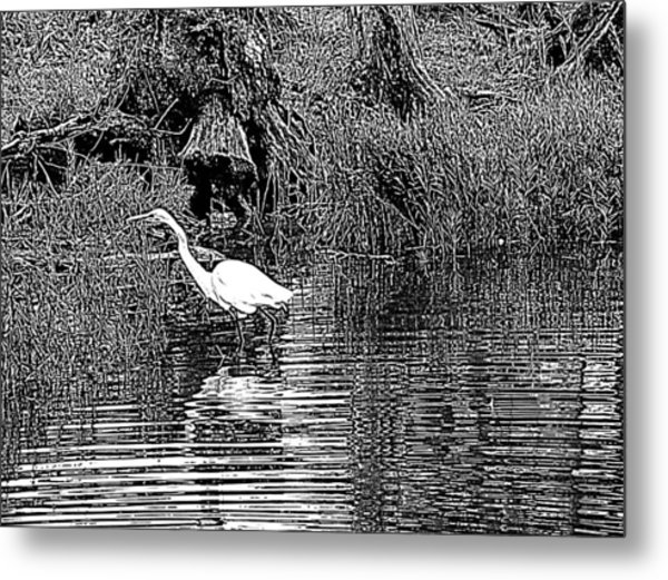 Egret On The Move Metal Print