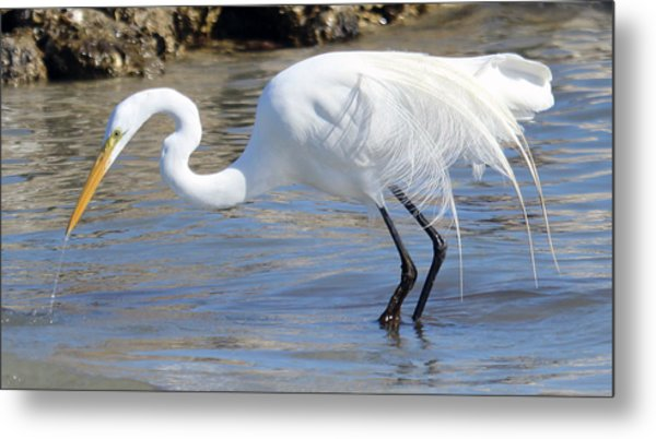 Great Egret On Prowl >> Egret On The Prowl Photograph By Catherine Modlin