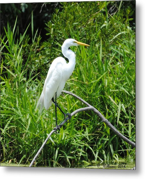Egret Perching On Branch Metal Print