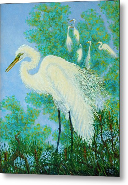 Egrets In Rookery - 20x16 Metal Print