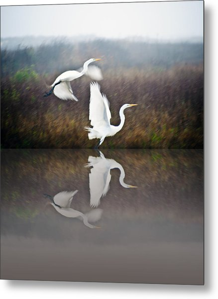 Egrets In The Fog Metal Print