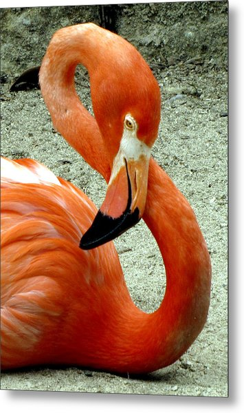 Figure Eight Flamingo Metal Print