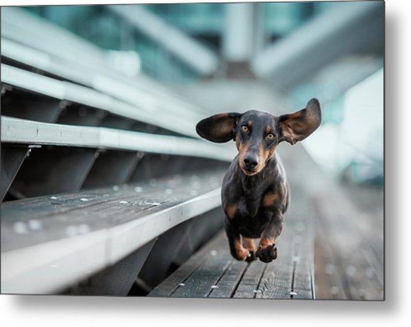 Ein Kleiner Hund La?uft Durch Die Welt.... Metal Print