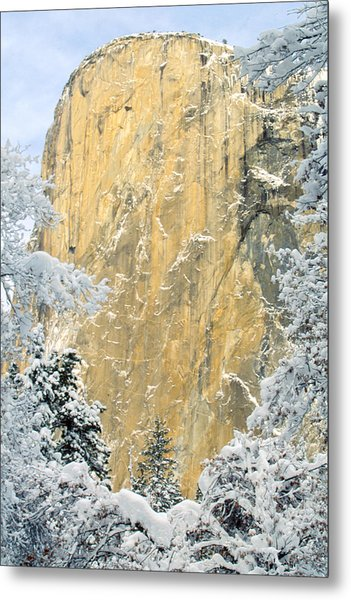 El Capitan With Snowy Trees Metal Print