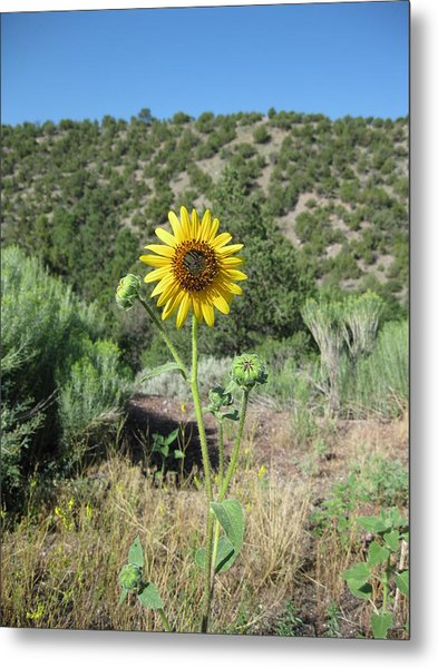 Elated Sunflower Metal Print
