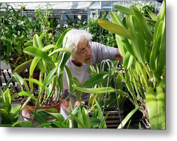 Elderly Woman Examining Plants Metal Print by Jim West
