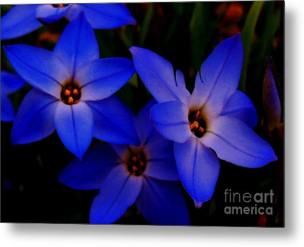 Electric Blue Metal Print by Sharon Costa