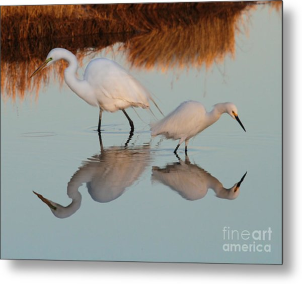 Elegant Big And Small Great White And Snowy Egrets Metal Print