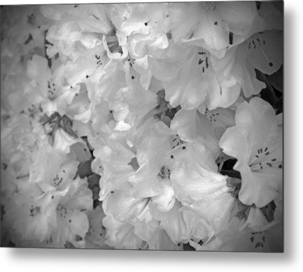 Elegant Soft White Flowers Metal Print by Tina Wentworth