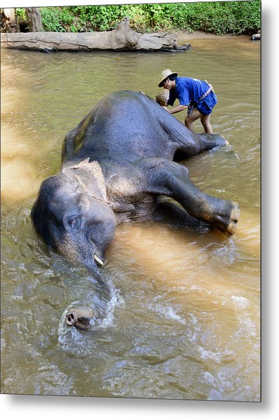 Elephant Bath Metal Print