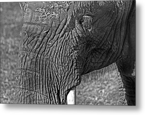 Elephant.. Dont Cry Metal Print
