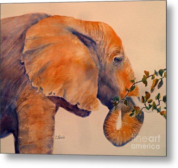 Elephant Eating Metal Print