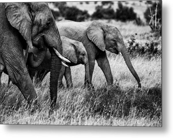 Elephant Family Metal Print by Vedran Vidak