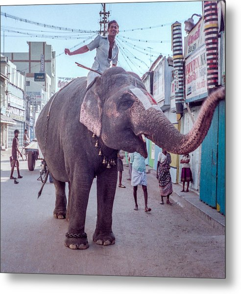 Elephant In The Street In India Metal Print