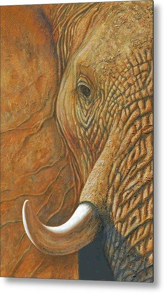 Elephant Matriarch Portrait Close Up Metal Print