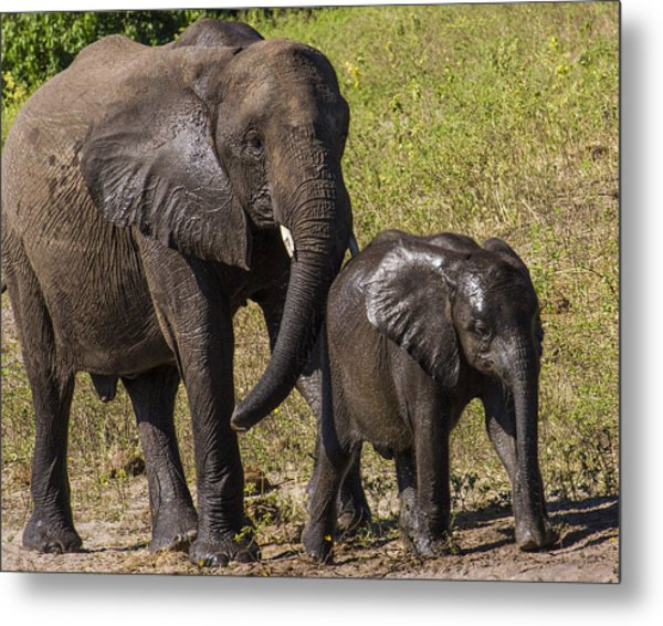 Elephant Mom And Baby Metal Print