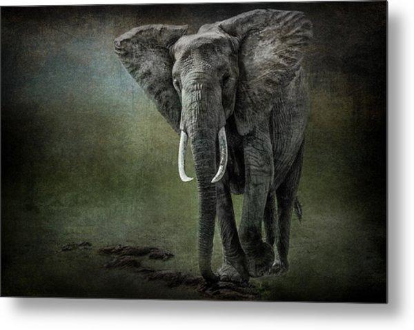 Elephant On The Rocks Metal Print