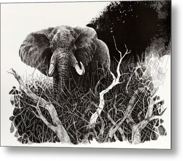 Elephant Metal Print by Paul Illian