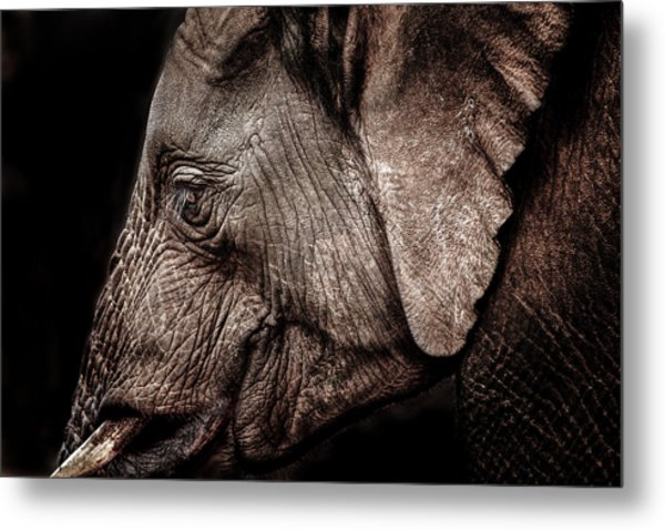 Elephant Profile Metal Print