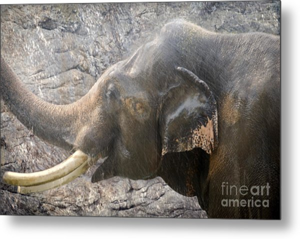 Elephant Shower Metal Print