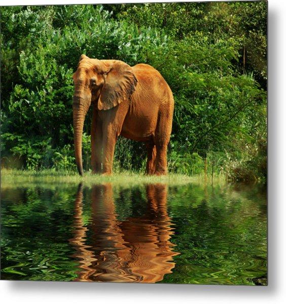Elephant The Giant Metal Print