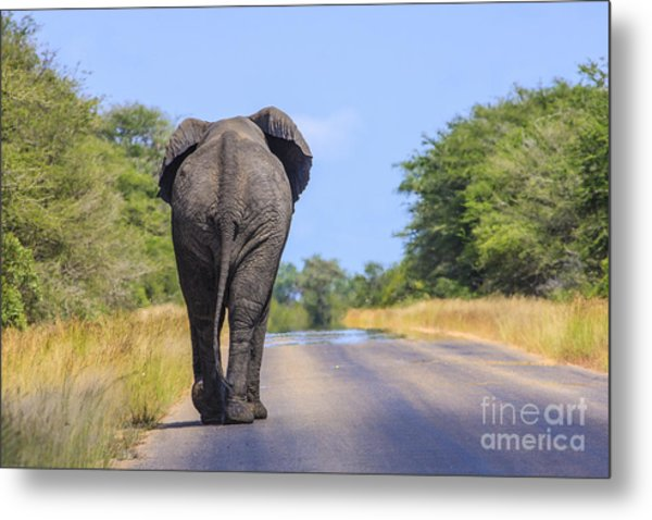 Elephant Walking Metal Print
