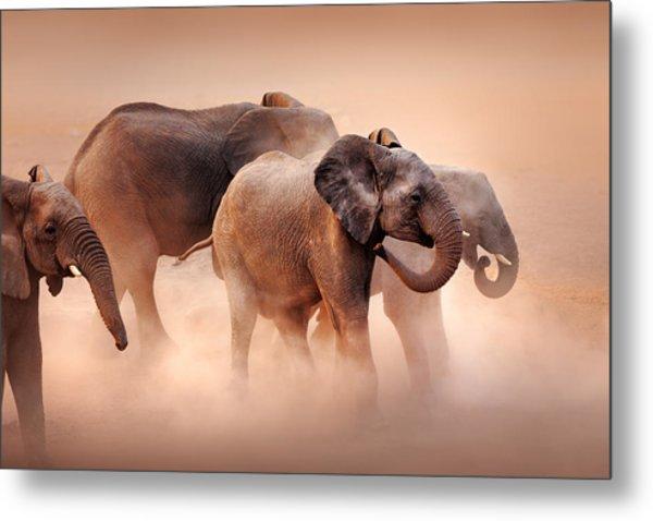 Elephants In Dust Metal Print