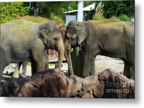 Elephants Snuggle Metal Print