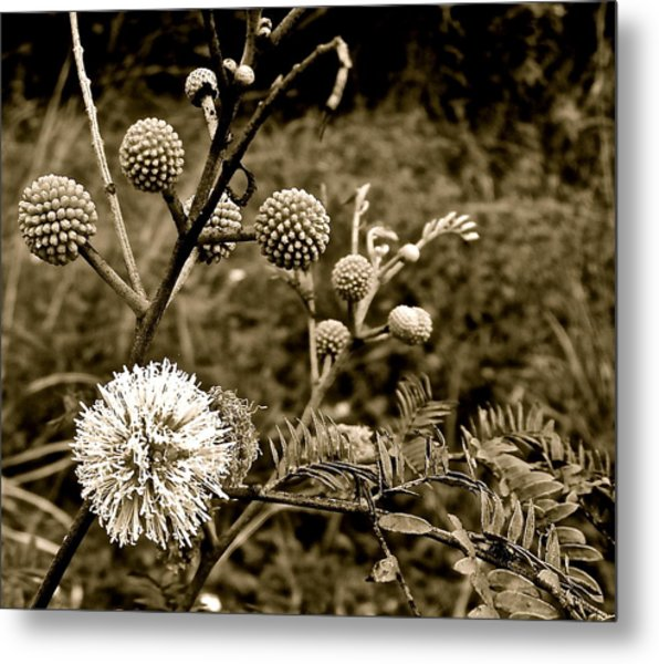 Eleuthera Flora Metal Print