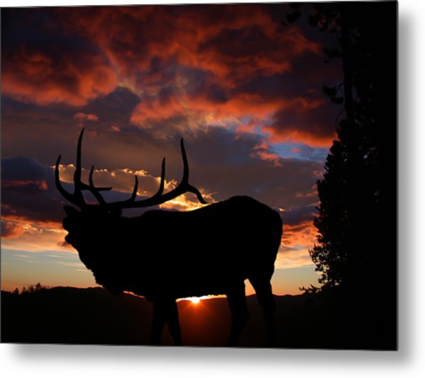 Elk At Sunset Metal Print