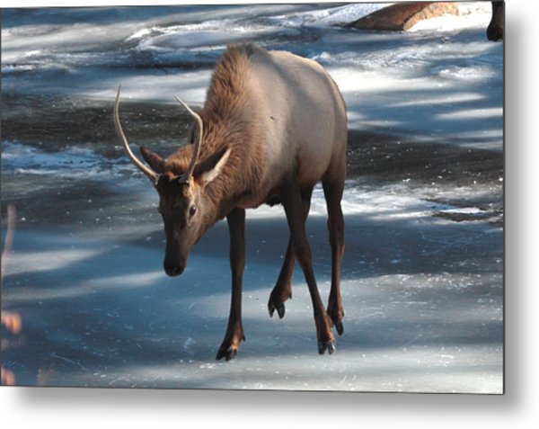 Elk On Ice Metal Print