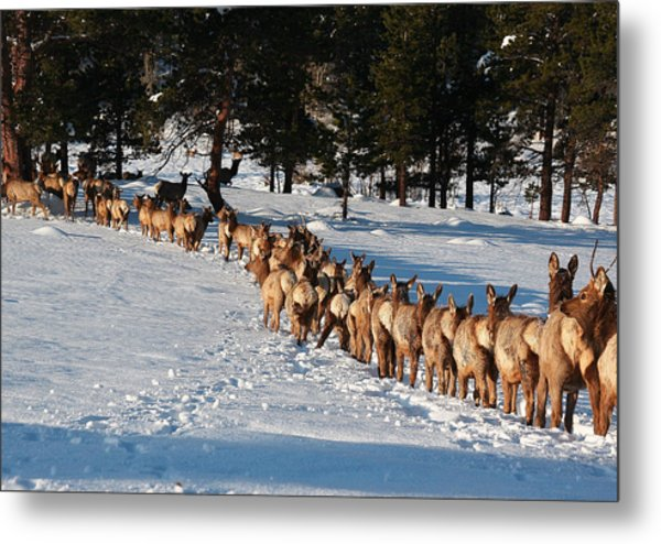 Elk Train Metal Print