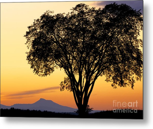 Elm At Twilight Metal Print